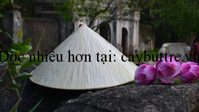 duong tinh song song cay but tre - ĐƯỜNG TÌNH SONG SONG