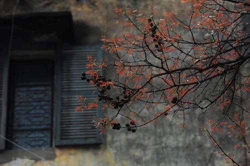 anh42 - Kí ức màu rêu