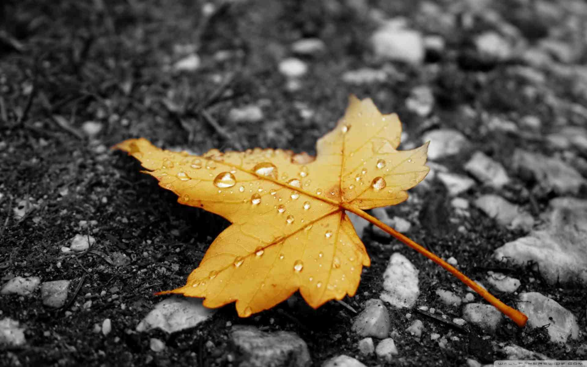 101 - Mùa lá rụng