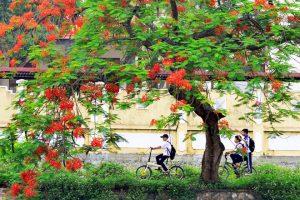 Truong Yen Chuong My 9 300x200 - Màu phượng đỏ - Tác giả Ngọc Huệ