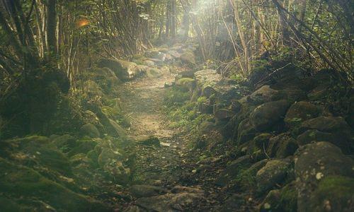 forest 438432 640 - Chừa cho mình một đường lui - Thơ Lạc Nhược