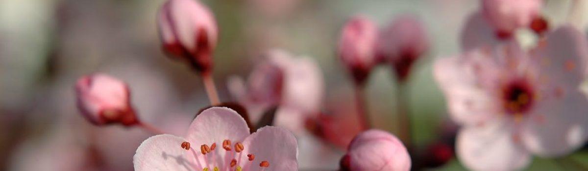 Đi tìm mùi Tết – Tản văn Ngọc Thiện