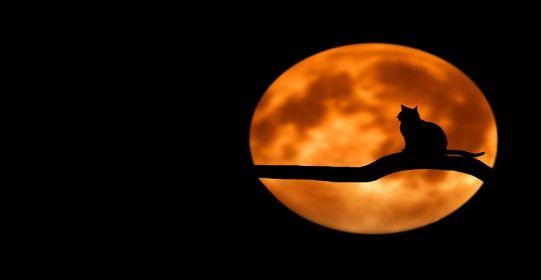 night and cat - Cho em cái hẹn - Thơ Vọng Tịch