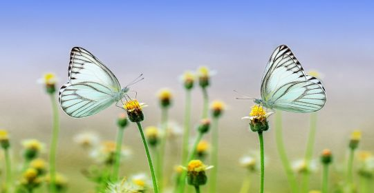butterfly 1127666 1280 - Bài thơ về những mùa nhung nhớ - Thơ Tuệ Minh