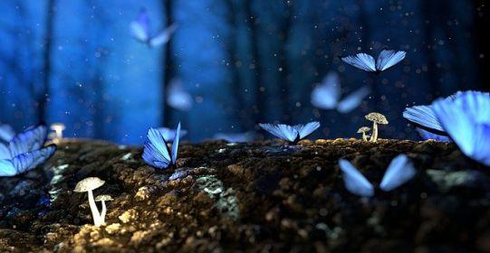 butterfly 2049567 640 - Ngôn từ hay hình ảnh - Tác giả ĐNK
