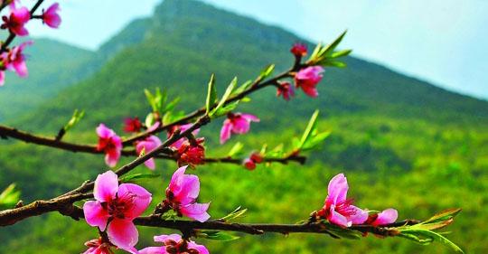 ngam xuanok - Ngẫm xuân - thơ Ngo Trung Quyen