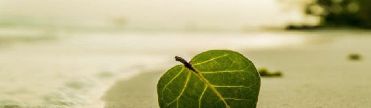 """""""Những điều ước chưa bao giờ thành"""" của Lam Thái Hòa là viển vông hay phản ánh thực tại?"""
