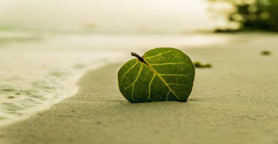 beach 394503 1280 - Biển tình yêu và nỗi nhớ - Thơ Lê Văn Duân