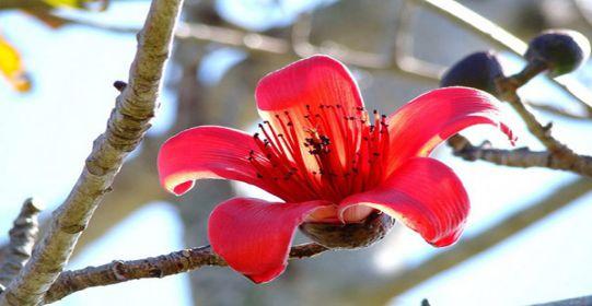 hoa gao do 1007 - Tháng ba - Thơ Thy