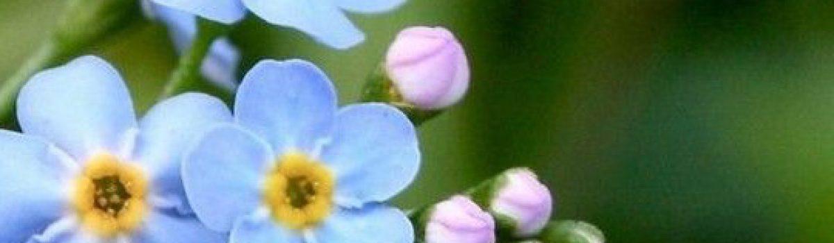 Khao khát tháng ba – Thơ Hoa Cúc