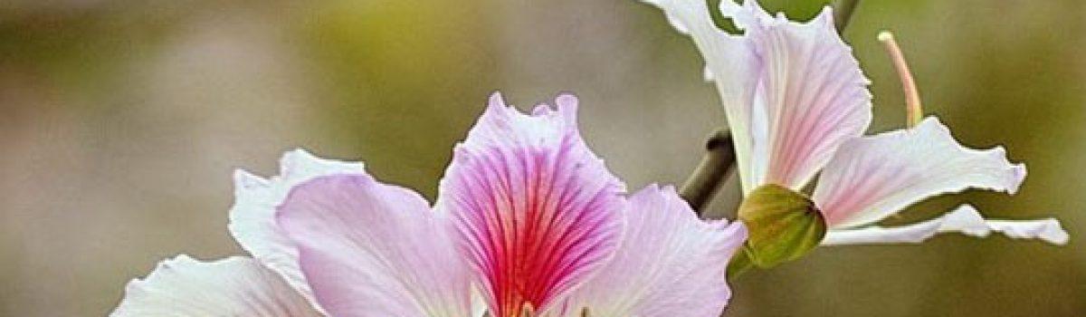 Tự khúc tháng ba – thơ Hoa Cúc