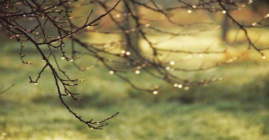 aesthetic 4571211 1280 - Hạ và cơn mưa em - Thơ Hoàng Chẩm