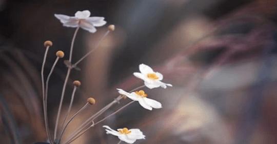 cỏ dại - Cỏ dại - thơ Thuận Ninh