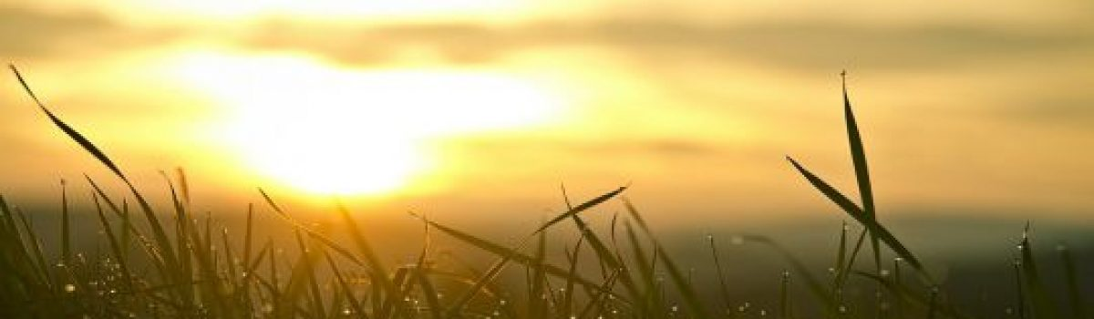 Nắng có như xuân – Thơ Hoàng Chẩm