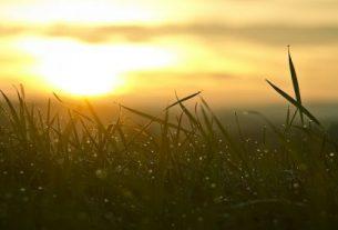grass 546794 1280 305x207 - Nắng có như xuân - Thơ Hoàng Chẩm