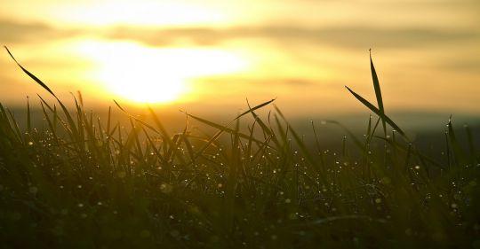 grass 546794 1280 - Nắng có như xuân - Thơ Hoàng Chẩm