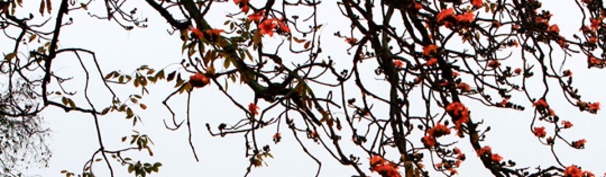 Tự khúc tháng 3 – Thơ Hoa Cúc