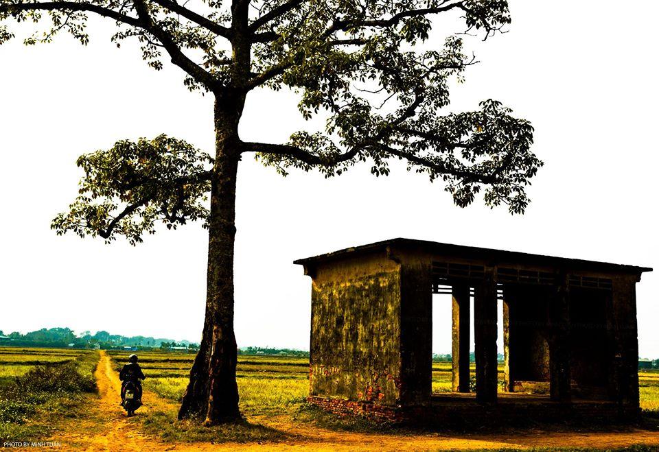 91625371 1074398852935766 8953986954995695616 n - Mai con về thăm lại quê xưa - Thơ Hồng Minh