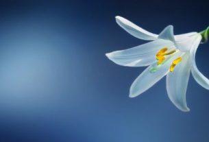 flower 729514 640 305x207 - Cô đơn tháng Tư - Tản văn Khánh An