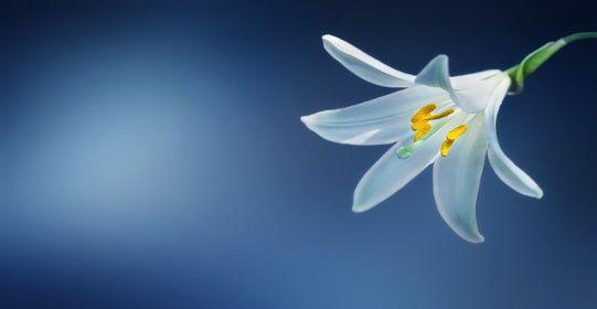 flower 729514 640 - Cô đơn tháng Tư - Tản văn Khánh An
