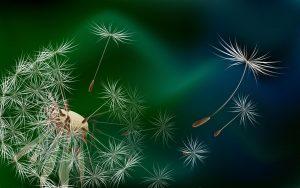 hinh nen hoa dep nhat 300x188 - Tháng tư và những hoài niệm không tên - Khánh An