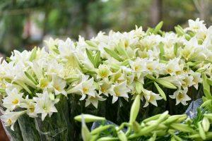 hoa loa ken 7 1554023389331 300x200 - Tháng tư mùa của hoa loa kèn trắng - Tản văn Thanh Thủy