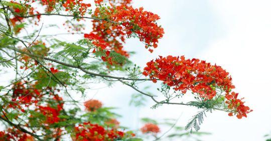 af1i5679 15900278148131359357255 crop 15900281670051069486847 - Hạ thương - Thơ Lê Văn Duân