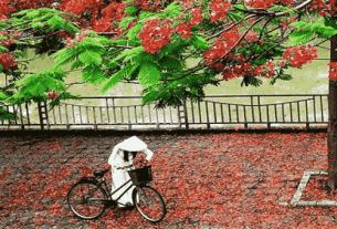 nang thang 5 tho le thanh luc 305x207 - Nắng tháng 5 - thơ Lê Thanh Lực