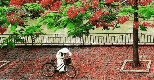 nang thang 5 tho le thanh luc - Nắng tháng 5 - thơ Lê Thanh Lực