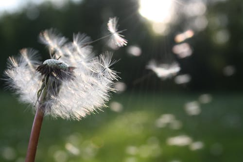 uoc la gio tho le van duan - Ước là gió - Thơ Lê Văn Duân