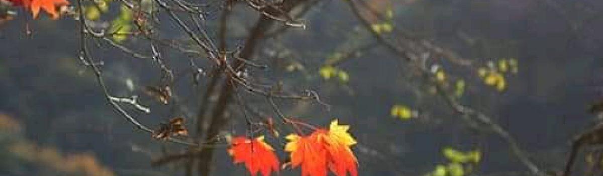 Hương mùa thu – Thơ Cúc Hoa
