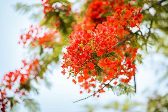 ab072c3972f743c5564226eeda3fb011 - Chia tay mùa hạ - Thơ Cúc Hoa