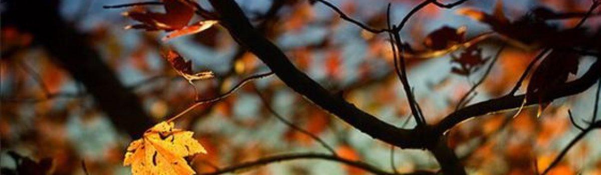 Như ngọn lá giữa mùa rơi – Thơ Hoàng Chẩm