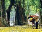Say lòng nét thu Hà thành   VIETRAVEL 2 136x102 - Bâng khuâng với mùa thu - Thơ Cúc Hoa
