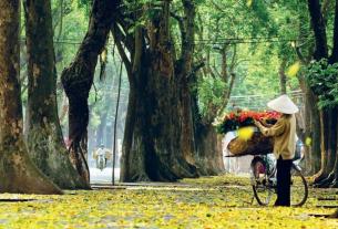 Say lòng nét thu Hà thành   VIETRAVEL 2 305x207 - Bâng khuâng với mùa thu - Thơ Cúc Hoa