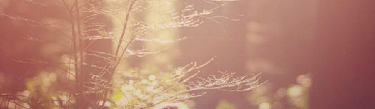 Thu đợi – thơ Cúc Hoa