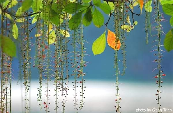 inbound662334818 - Nhớ một nét mùa thu Hà Nội - Thơ Cúc Hoa