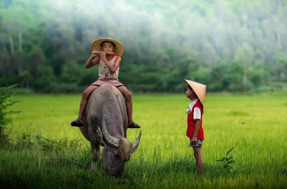 FB IMG 1601381568863 - Đêm nay lại mơ... ghé về miền thương nhớ - Thơ Thanh_Sunshine