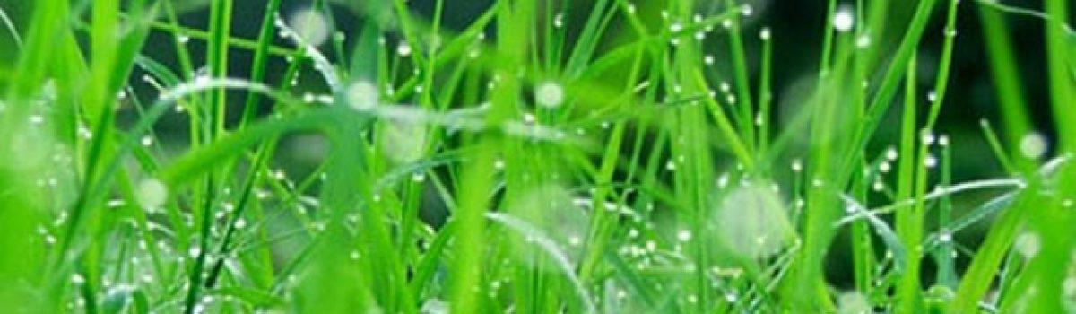 Cơn mưa qua – Thơ Lão Bống