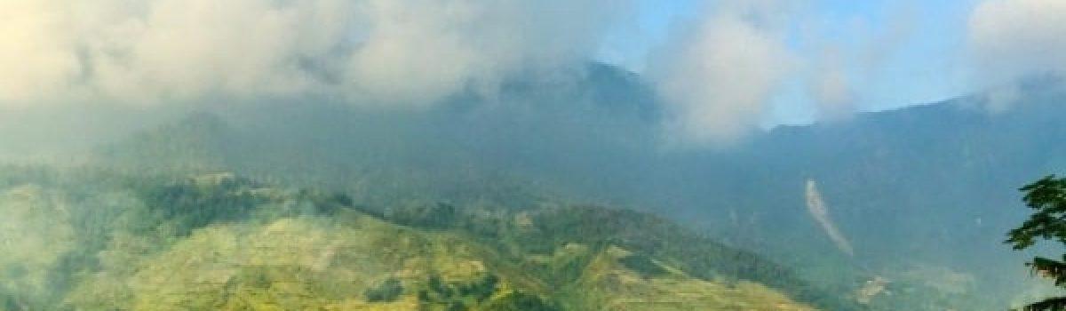 Về với rừng – thơ Bùi Hiệp