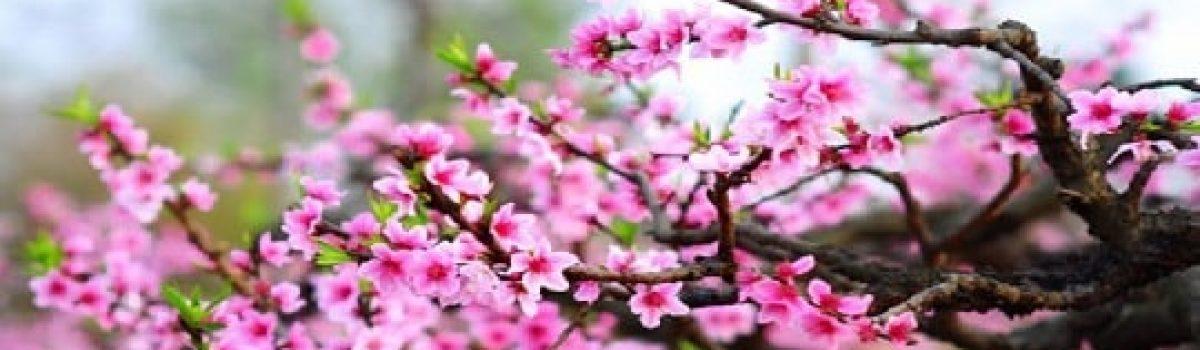 Chùm tứ tuyệt Xuân – tác giả Tony Bui