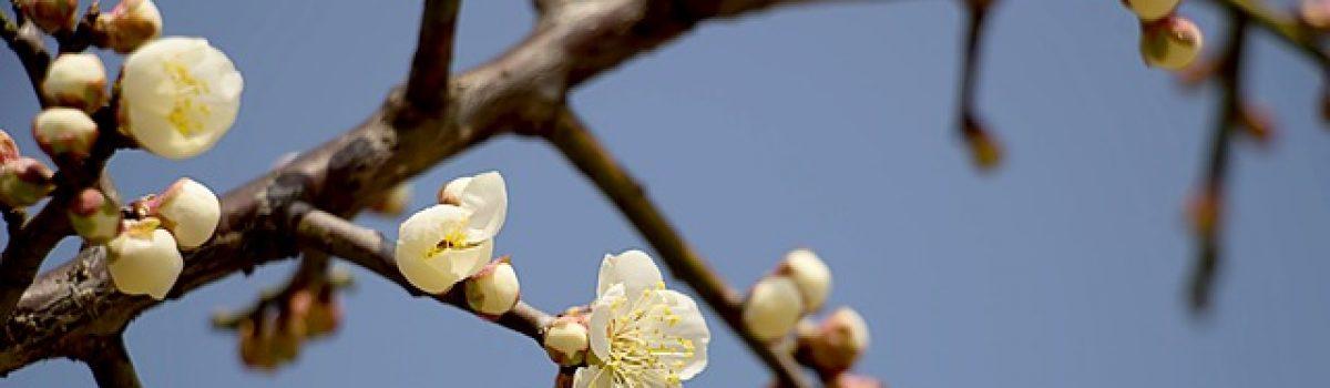 Với mùa xuân còn đó – Thơ Hoàng Chẩm
