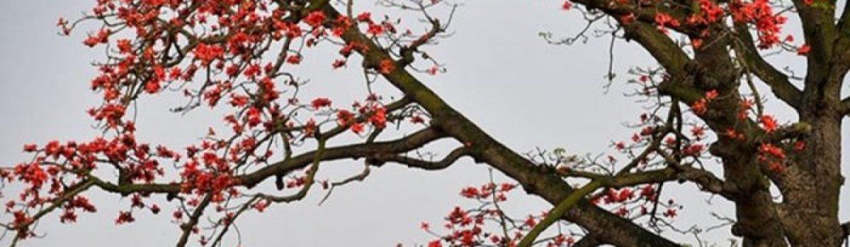 Điệp khúc tháng Ba sầu – Thơ  Bùi Hiệp