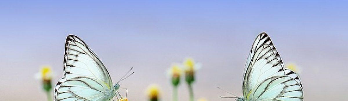 Xuân có gì vui – Thơ Tình Cuối