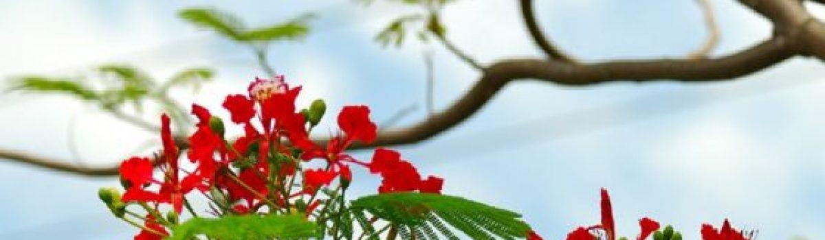 Hạ non – thơ Phạm Thu