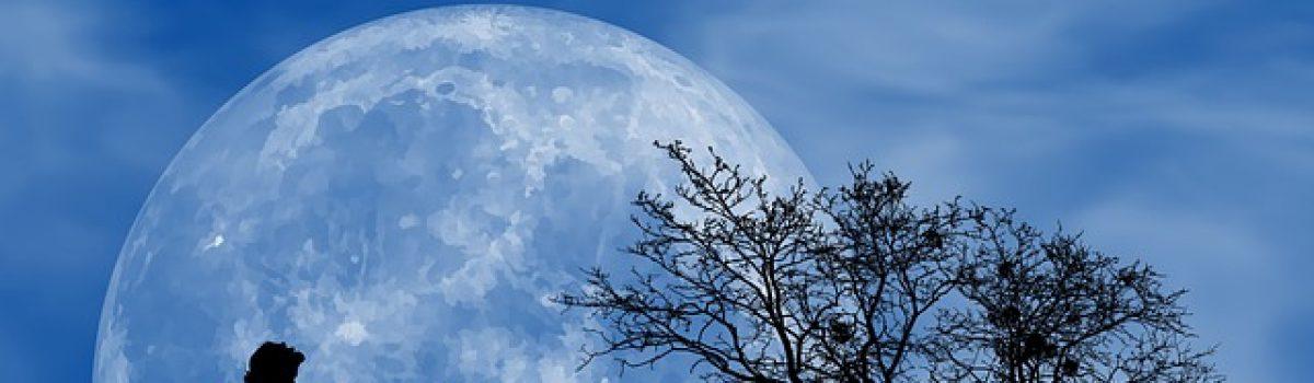 Vầng trăng thơ… Anh say giọt nắng tình – Chùm thơ haiku Nguyễn Tâm Thanh