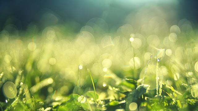 Hương cỏ – Thơ Hồng Lĩnh