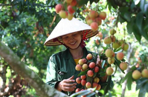 Bâng quơ – Thơ Hà Nguyễn