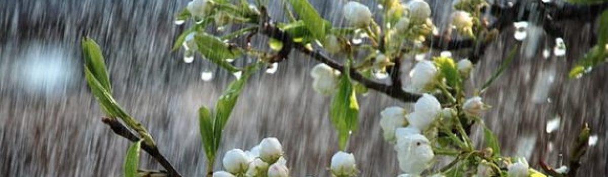 Khát mưa – Thơ Phạm Thu
