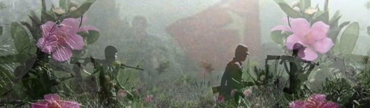 Sắc tím bên trời – Tản văn Dương Hồng Kông